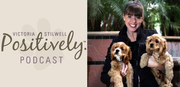 positively podcast h rescue dog art blog eader